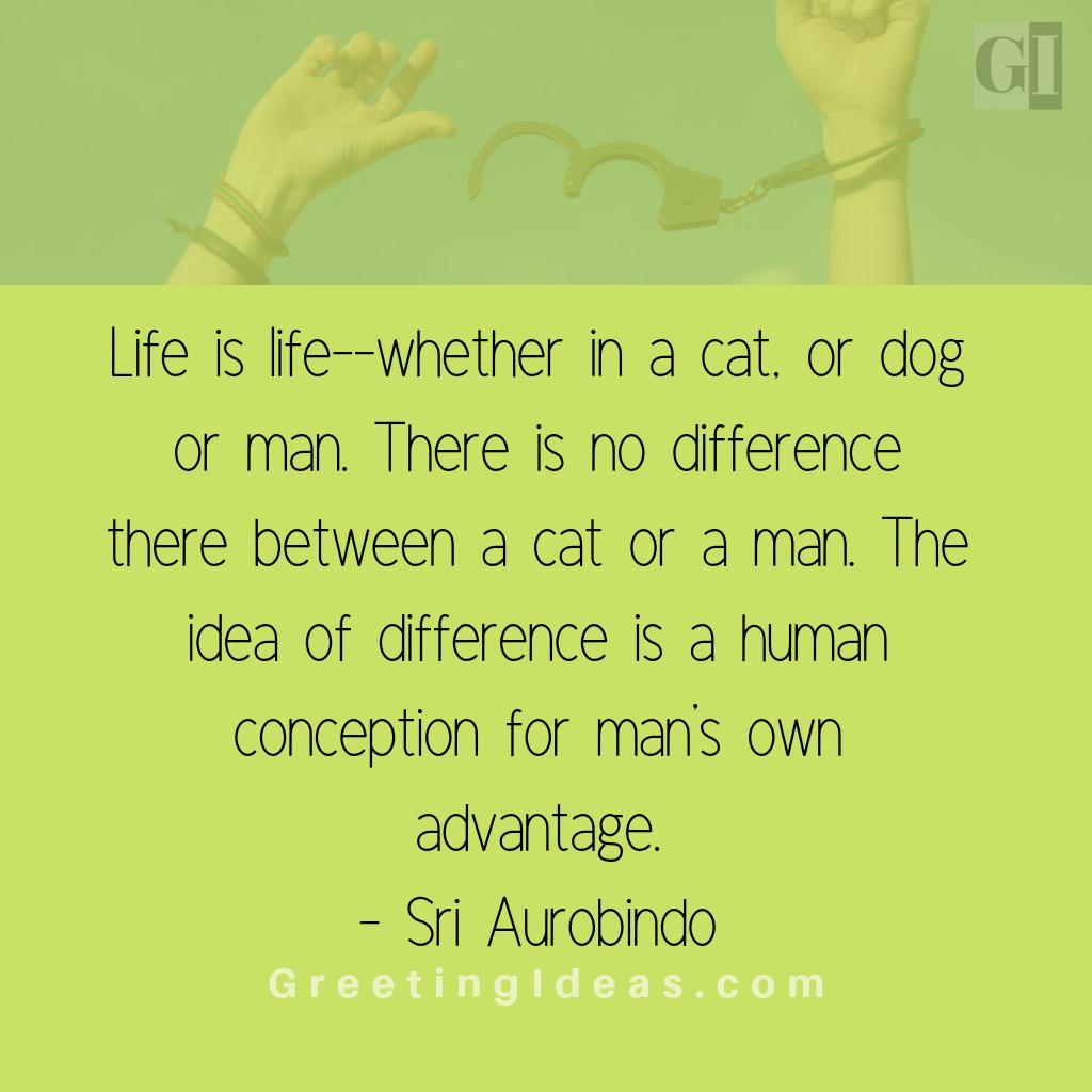 Animals Rights