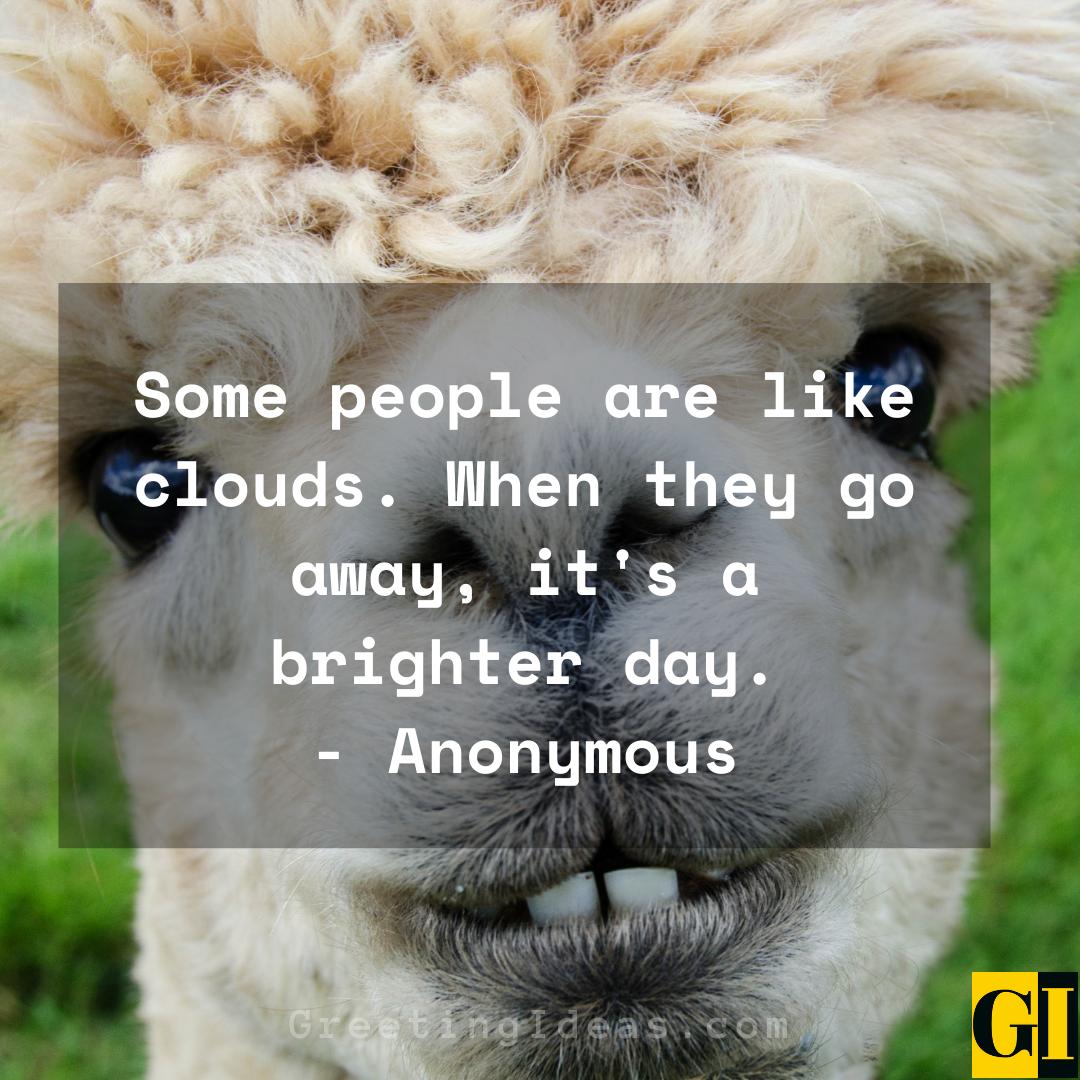 Amusing Quotes Greeting Ideas 5