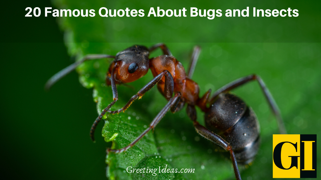 20 Famous Quotes About Bugs and Insects