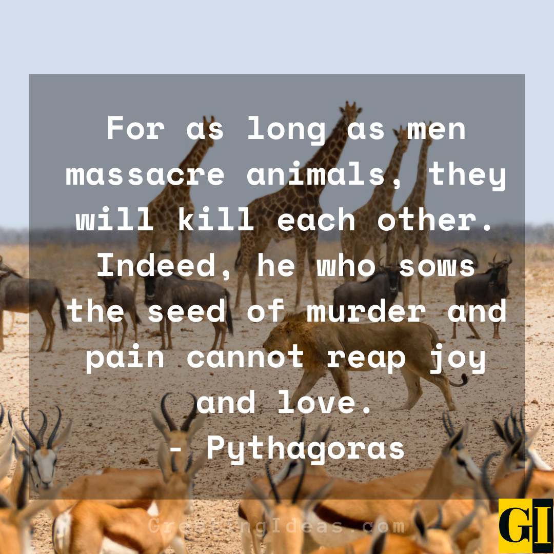 Animal Abuse Quotes Greeting Ideas 2