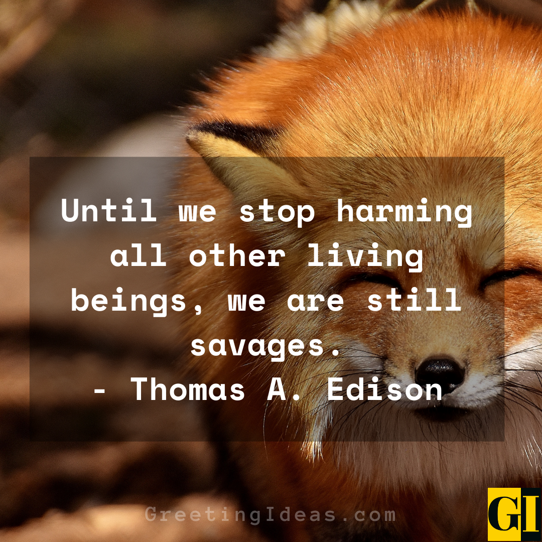 Animal Abuse Quotes Greeting Ideas 4