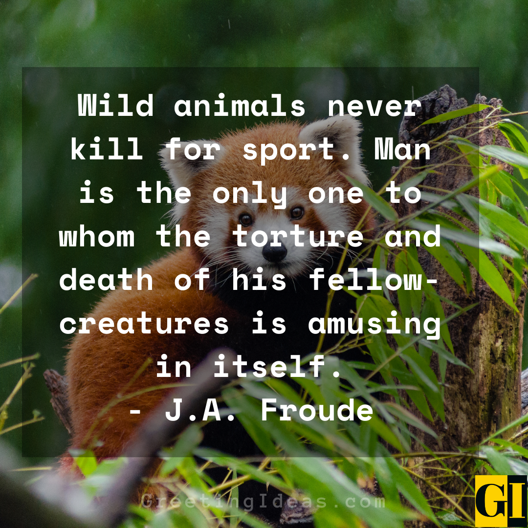 Animal Abuse Quotes Greeting Ideas 5