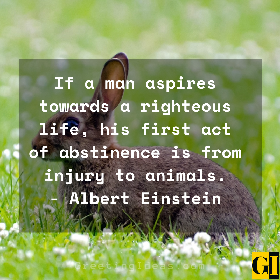 Animal Abuse Quotes Greeting Ideas 6