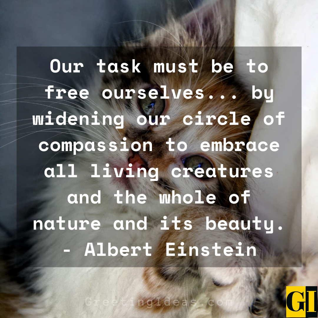 animal rights quotes greeting ideas 2