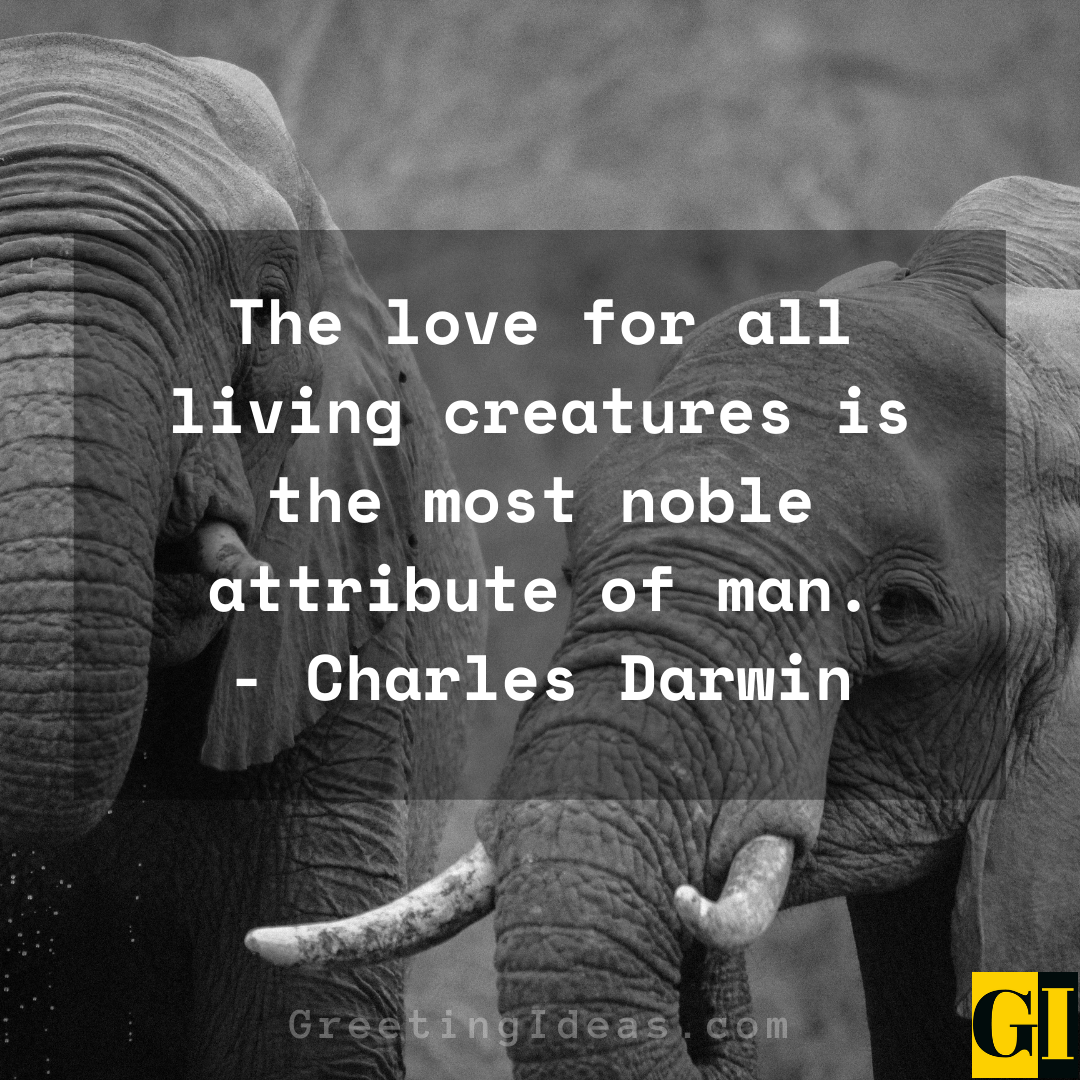 animal rights quotes greeting ideas 5
