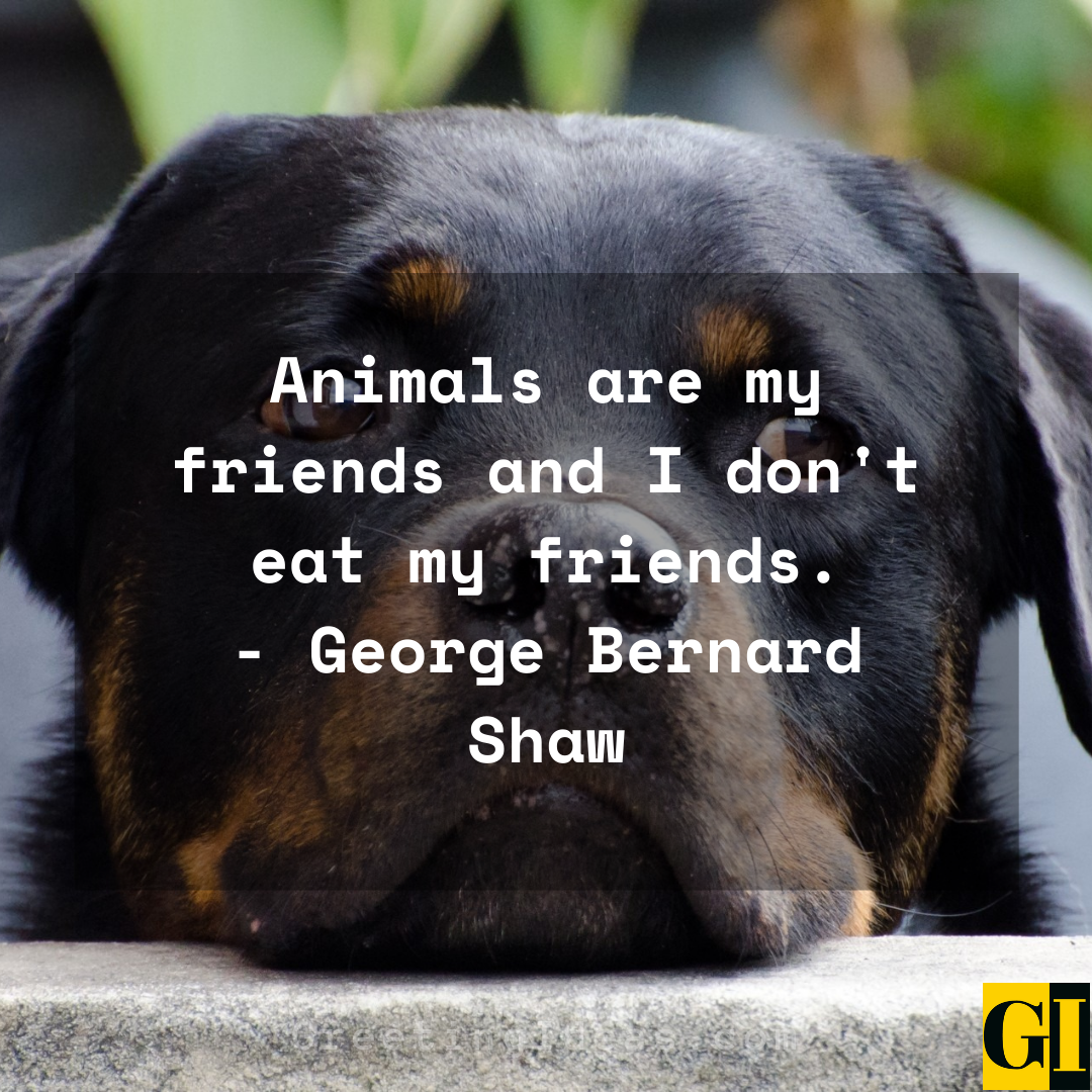 animal rights quotes greeting ideas 6