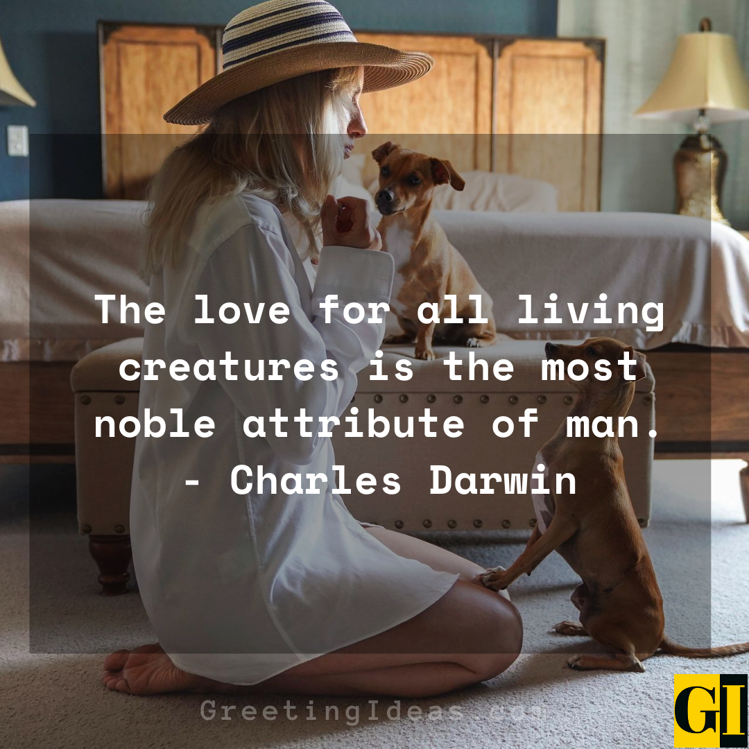 15 Cute and Best Animal Lover Quotes and Sayings 1