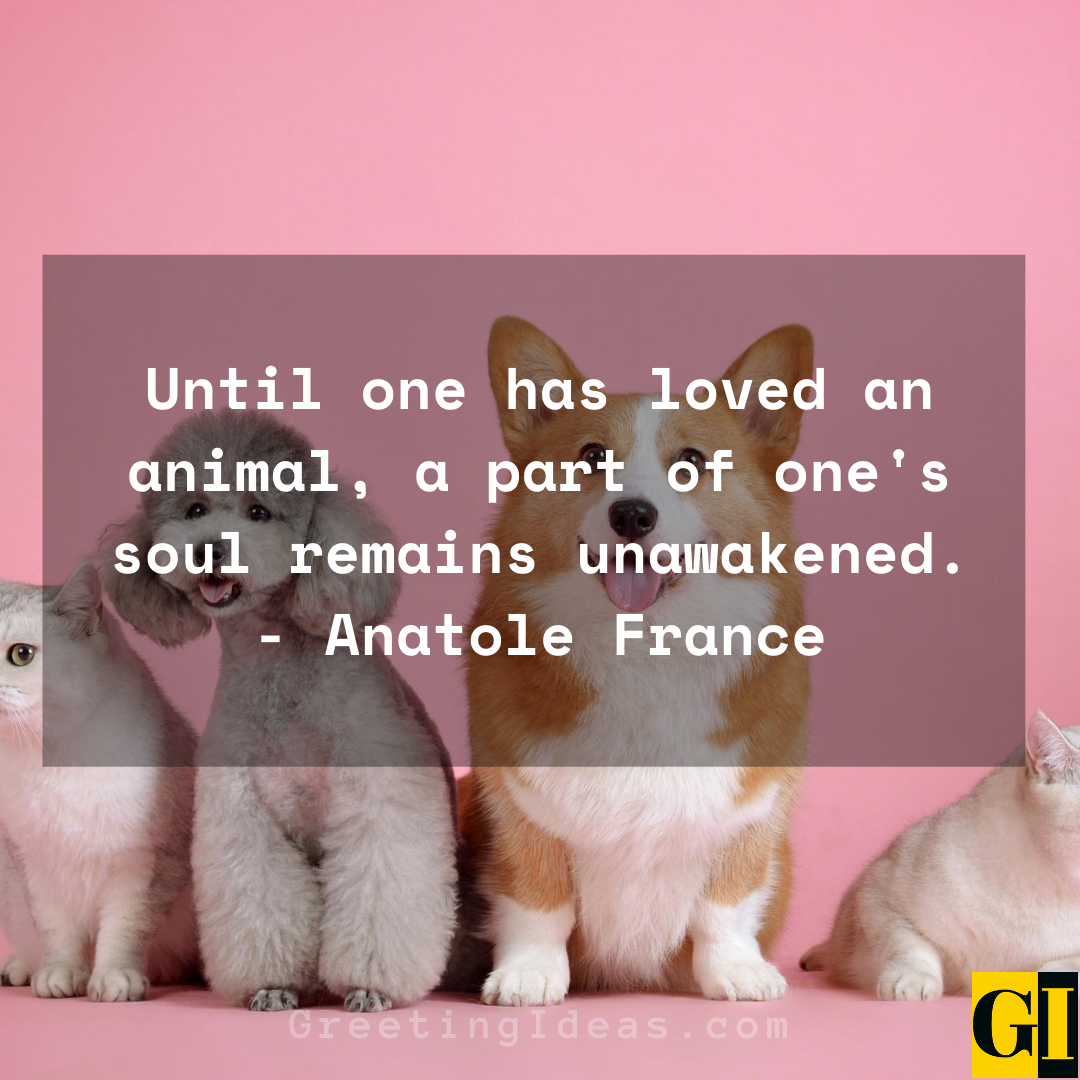 15 Cute and Best Animal Lover Quotes and Sayings 3