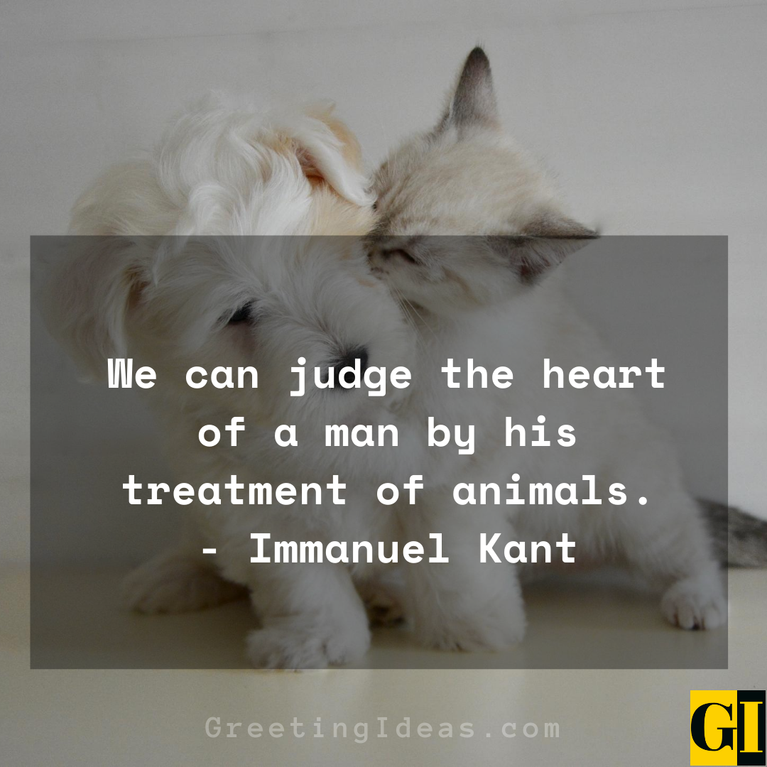 15 Cute and Best Animal Lover Quotes and Sayings 5