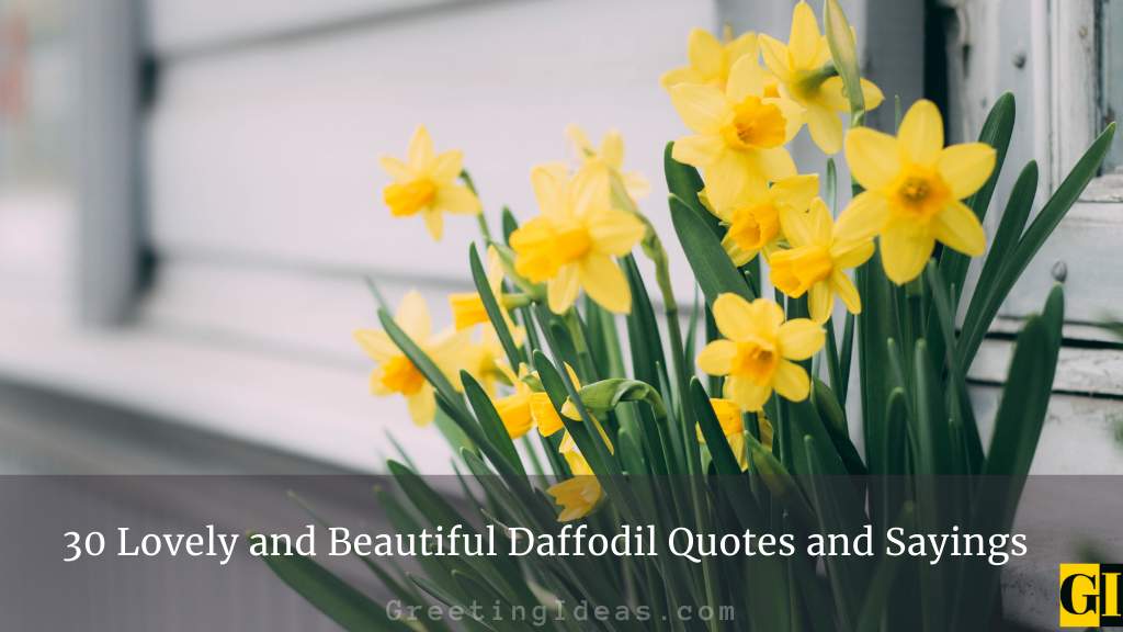 30 Lovely and Beautiful Daffodil Quotes and Sayings
