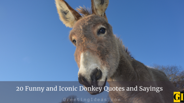 20 Funny and Iconic Donkey Quotes and Sayings