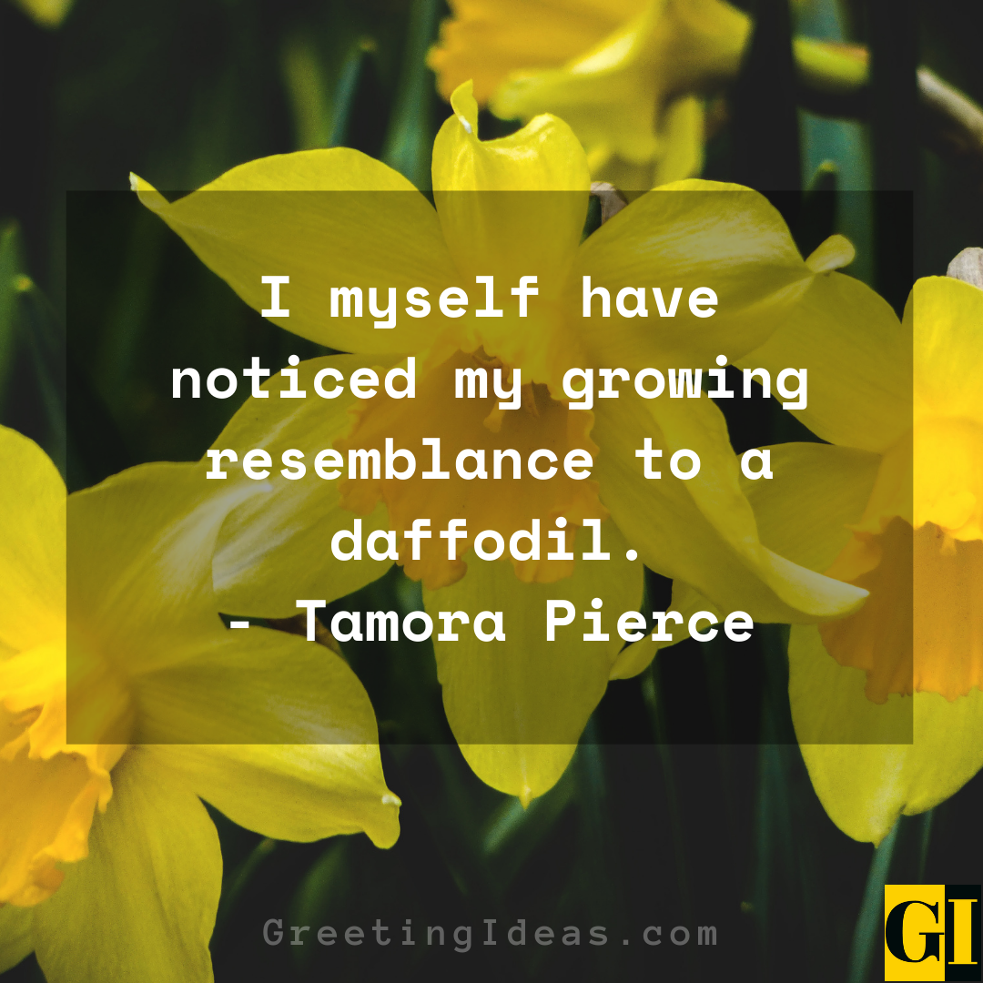 Daffodil Quotes Greeting Ideas 5