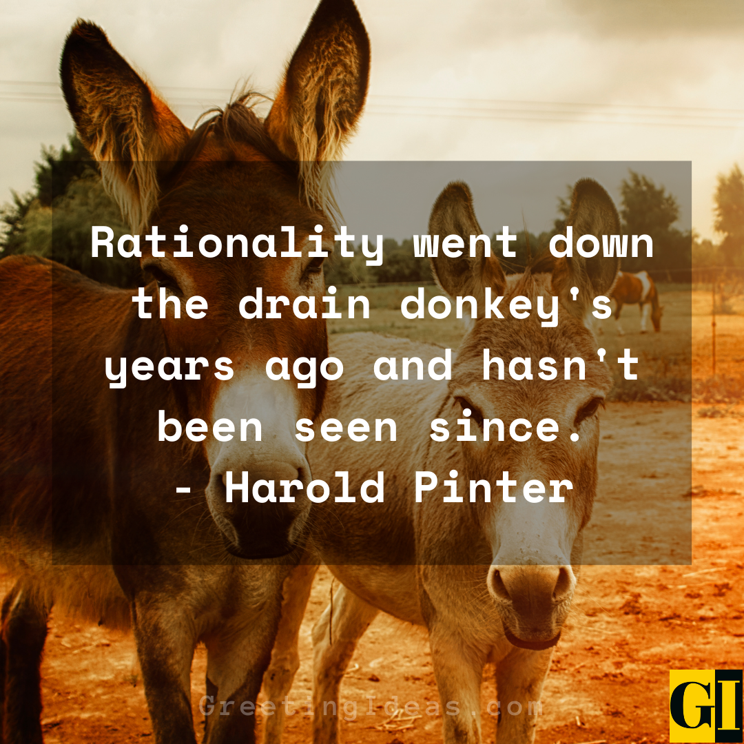 Donkey Quotes Greeting Ideas 2