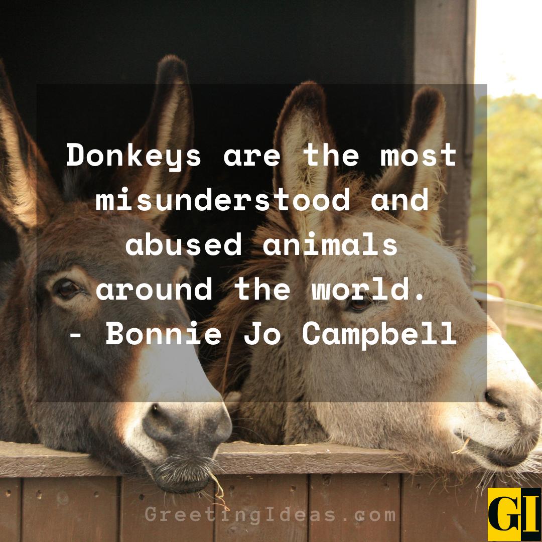 Donkey Quotes Greeting Ideas 4