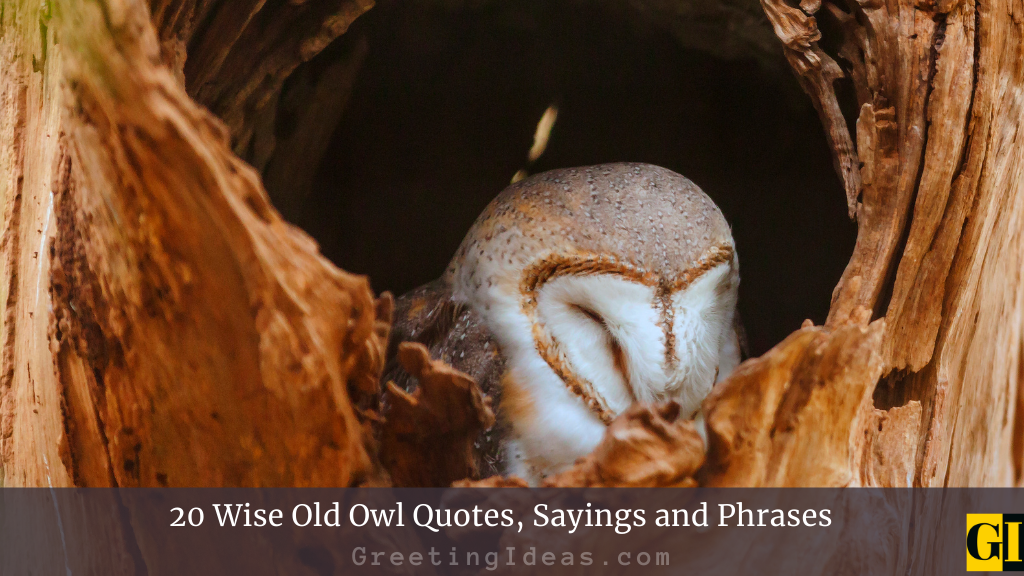 20 Wise Old Owl Quotes Sayings and Phrases