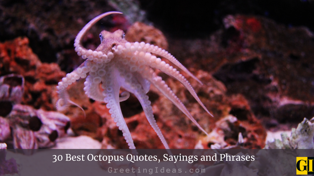 30 Best Octopus Quotes Sayings and Phrases