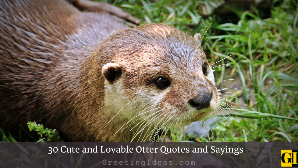 30 Cute and Lovable Otter Quotes and Sayings
